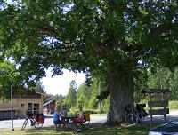 czki pod drzewem