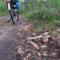 las, prawdziwek i rower